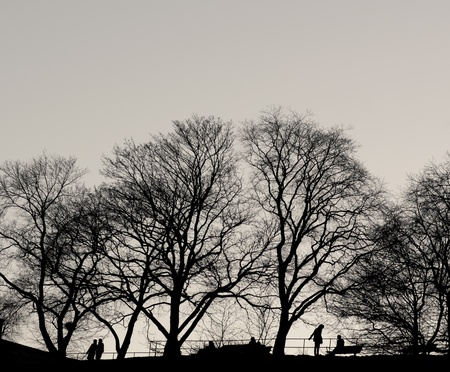 Silhouettes of people under bare trees in park photo