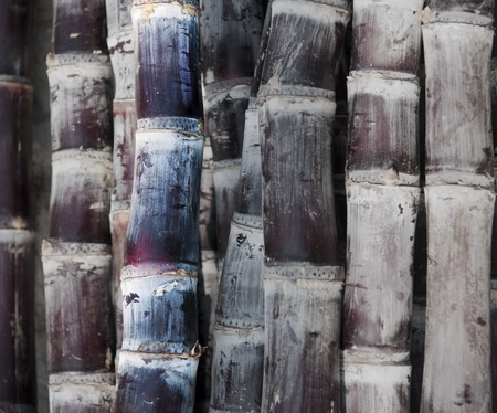 Close up of sugar canes in shades of purple Stock Photo - 9152367