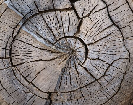 wood cut: cross section of split old weathered tree trunk