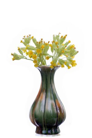 cowslip: Vase of cowslip isolated on white Stock Photo