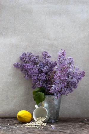 purple lilac: Still life with lilac flowers in a pot