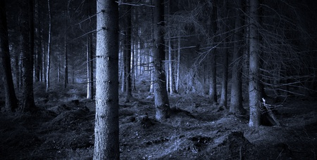 mystery woods: Spooky blue forest with dry trees Stock Photo