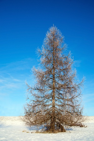 sunshines: Bare tree on a sunny winter day