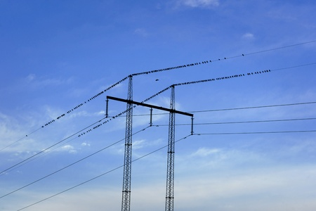 migrate: Electricity pylon and wires full of birds ready to migrate