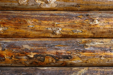 rustic  wood: Background of rough rustic timbered wall