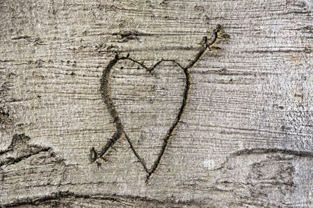 bark background: Heart carved in the bark of a tree