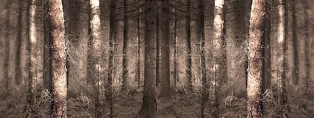 wallpaper image of spooky forest. The picture is symmetrical which means it can be copied and joined seamless as many tiems as required. photo
