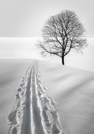 bare tree: ski track in  field with single bare tree Stock Photo