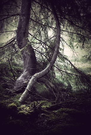 trees with moss with dark spooky feeling photo