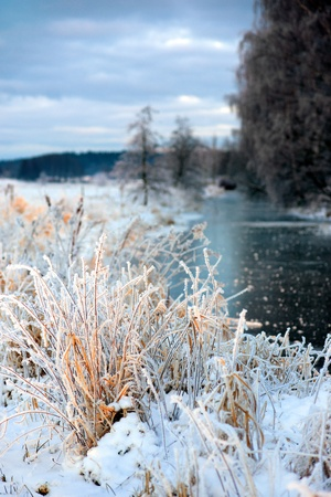 Grass in rime frost in beautiful winter landscape photo