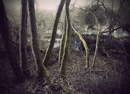 swamp: Trees with green moss in swamp area