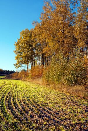 plowed field: Plowed field on sunny bright autumn day