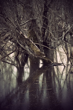 Trees in swamp area reflected in water photo