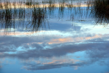 biotope: Lake with reeds reflected in the water