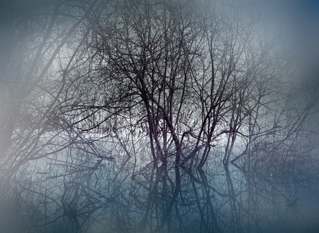 trees in swamp area on misty evening photo