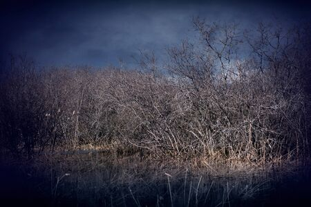Spooky swamp landscape in dark colors photo