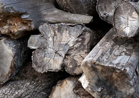 sawed: Heap of ancient logs of hardwood
