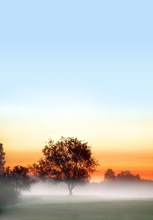 dawning: solitaire tree in fog in early morning on colorful sky Stock Photo