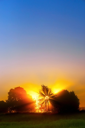 Beautiful dawn with sunbeams filtered through tree  Stock Photo - 14000463