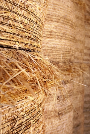 Close up of baled hay stacked to dry photo