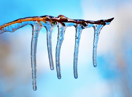 Zweig mit Eiszapfen am blauen Himmel auf sonnigen Wintertag Standard-Bild