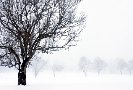 foggy winter landscape with bare tree in foreground