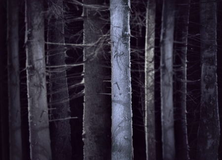 Spooky forest in winter evening with tree trunks  in shades of blue photo