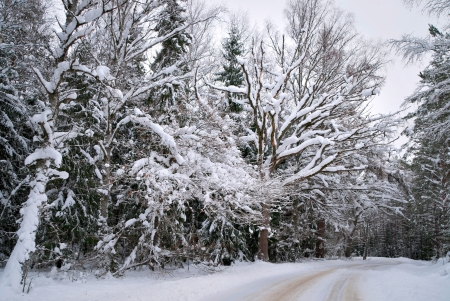 Rural asphalt road with snow in trees photo