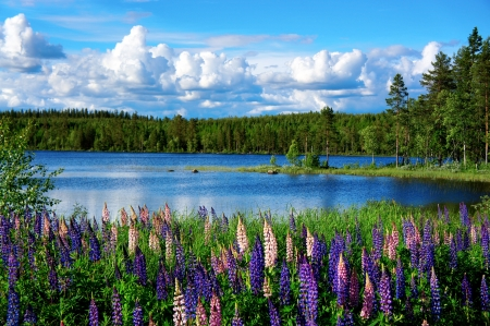 Schöne skandinavischen Sommer Landschaft mit See und lupies