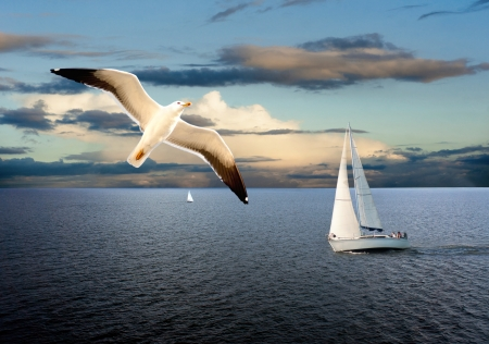 Sail boats on sea with cloudy sky and seagull in foreground Stock Photo - 14788636