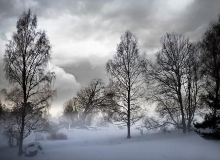 吹雪不機嫌そうな空と木々 写真素材