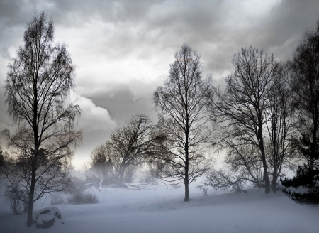 trees in snowstorm with moody sky