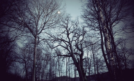 dark forest: Spooky bare trees on dark night with moonlight Stock Photo