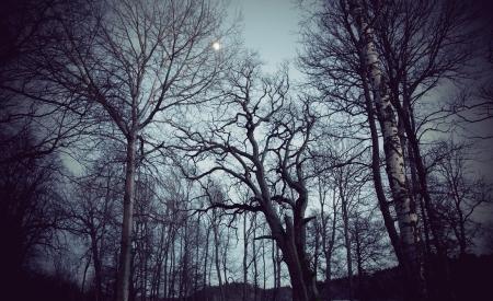 Spooky bare trees on dark night with moonlight photo