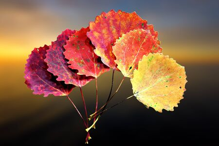 aspen leaf: Six autumn aspen leaves in shades of red and yellow, on soft yellow, orange and blue background Stock Photo