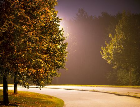 suburban street: Empty street with tree and lamp in autumn evening