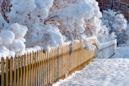 Snow covered wooden fence and scrubs  in sunshine Stock Photo - 16651967