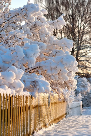 Snow covered wooden fence and scrubs  in sunshine Stock Photo - 16651963