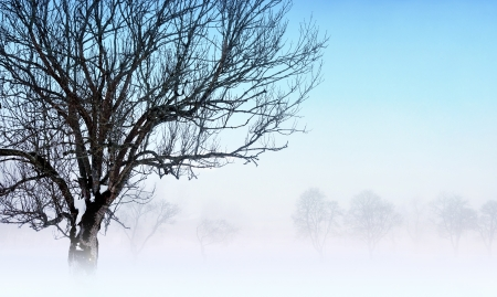 foggy winter landscape with bare tree in foreground photo