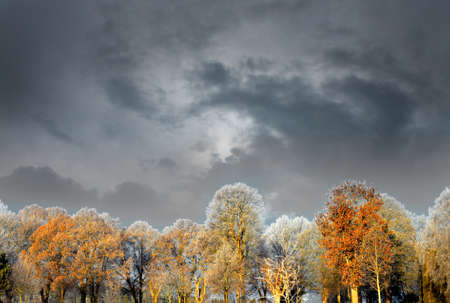 rime frost: Colorful trees with rime frost in sunshine on dark moody sky Stock Photo