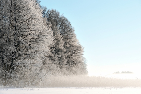 rime frost: Trees with rime frost by lake on cold winter day Stock Photo