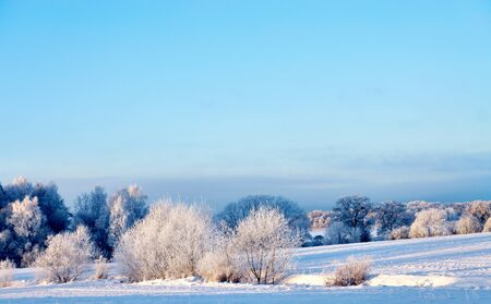 rime frost: Beautiful winter landscape with rime frost in bushes and trees