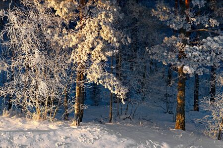rime frost: Trees with rime frost and snow in bright sunshine Stock Photo