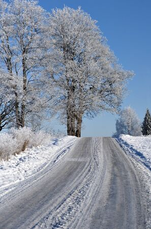 rime frost: Narrow road in winter landscape with trees with rime frost