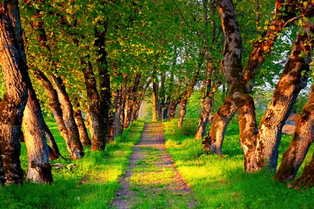 walking path: Walking path with avenue in evening light, just before sunset Stock Photo
