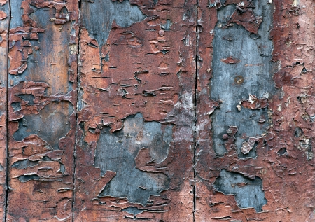 flaking: Background with grunge wooden wall with flaking paint
