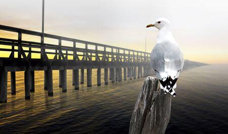 Seagull watching very long pier in orange sunset photo