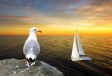Seagull on cliff watching white yacht at golden sunset