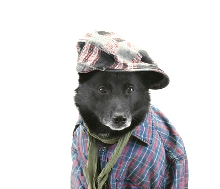leasure: Dog dressed in casual clothes ready for leasure activities