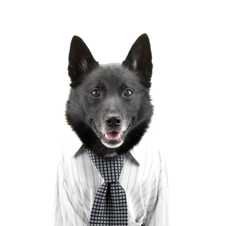 surprised dog: Portrait of dog dressed up as happy and surprised businessman